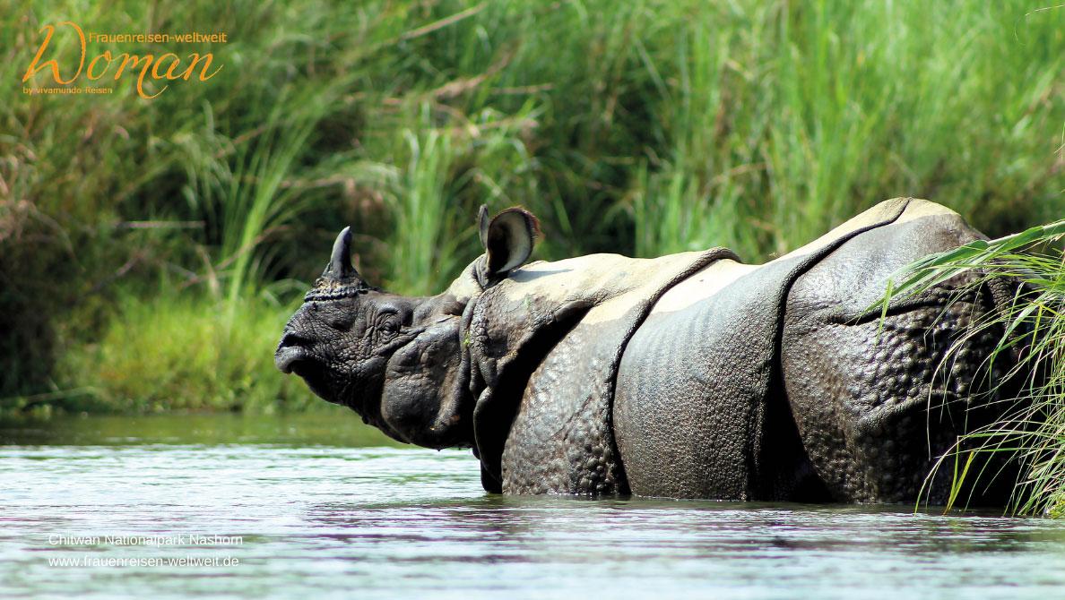 Chitwan Nationalpark_Nashorn