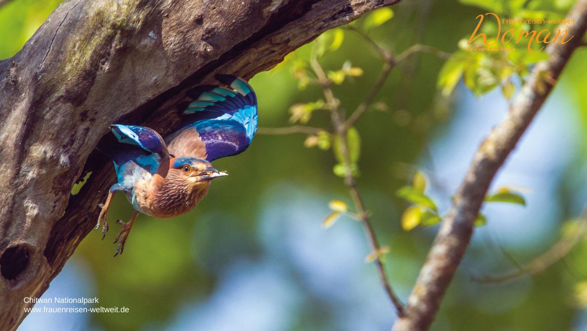 Chitwan Nationalpark Vogelbobachtung